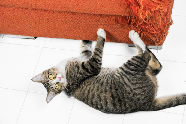 tips to stop cat scratching furniture