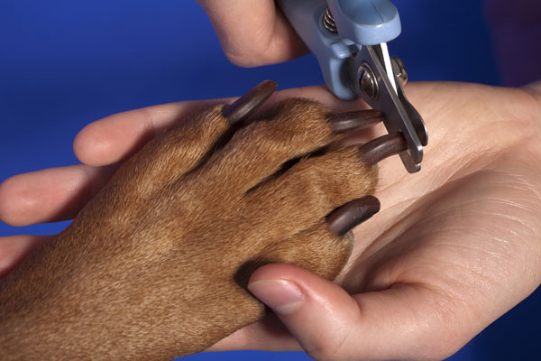 dog nail clipping FAQ