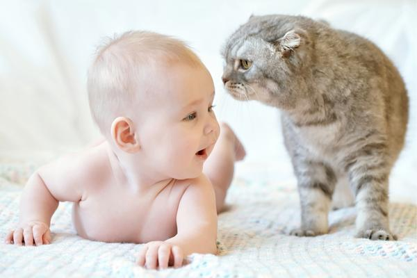 introducing a cat to your children