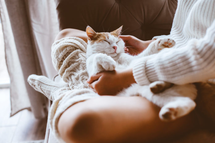 10 cute however bizarre issues cats do once they love you