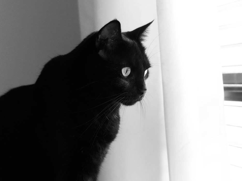 2020 'The Six Stages of Cats' Photography Competition Winner – Kalinda Clarke from Australia