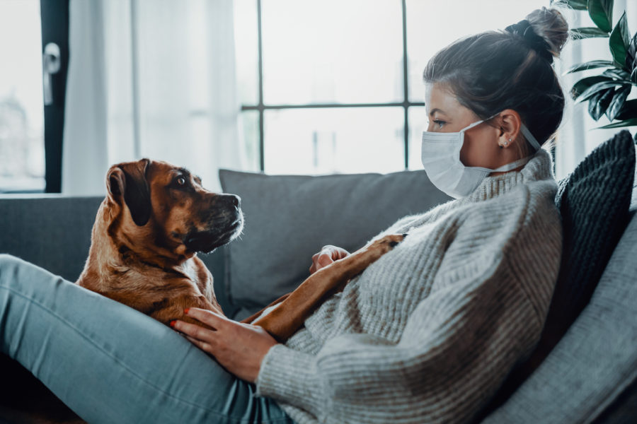 4 information about pet sitters and COVID-19
