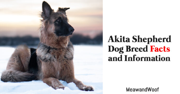 Akita Shepherd Dog Breed Facts and Information 2021