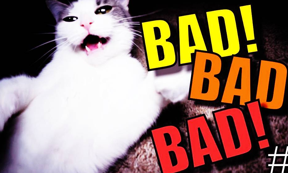 Bad Things about Cats | Reasons Why You Shouldn't have a Cat