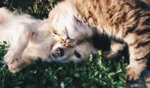 Best Natural Ways To get Rid of Fleas On Dogs