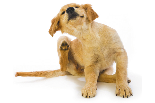 Can Coconut Oil Help a Dog's Itchy Skin?