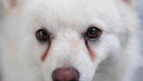 Can Dogs Cry? What Do Dogs' Tears Mean?