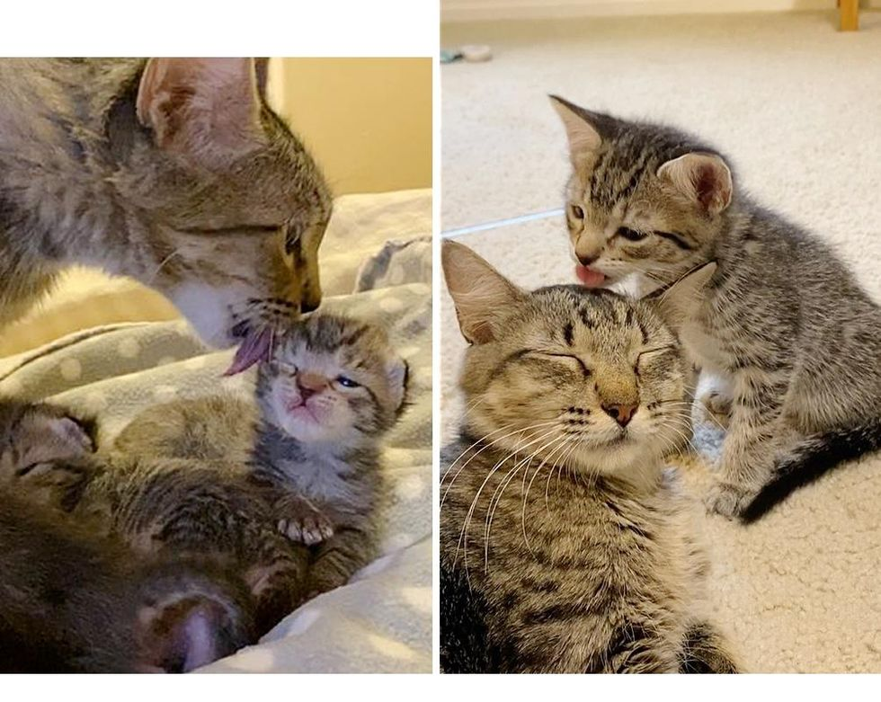 Cat Gives Kittens Unconditional Love, One of Them Clings to Her and Insists on Being Her Little Shadow
