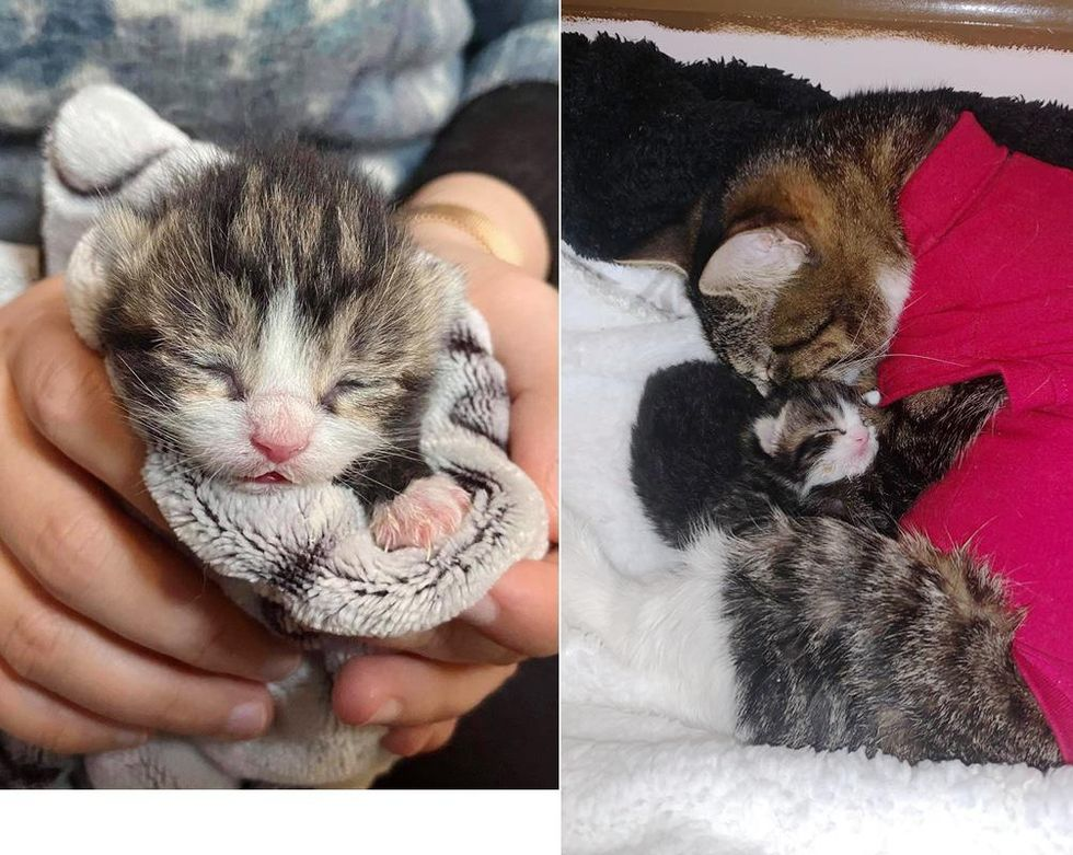 Cat So Happy to Be Reunited with Her Only Kitten After She Was Brought Back from the Brink