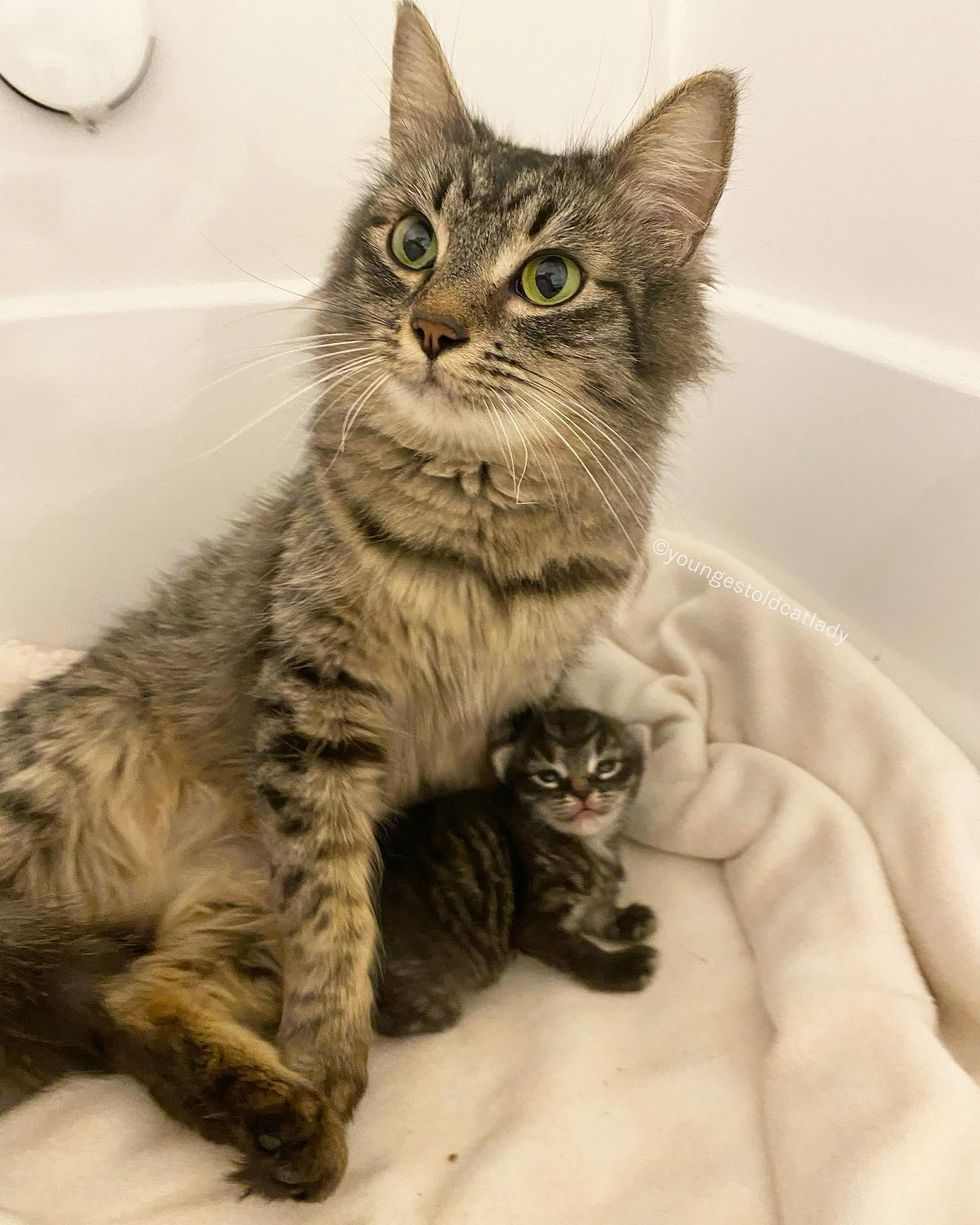Cat With Adorable Looks Finds People to Help Her Only Kitten, She Can't Stop Smiling