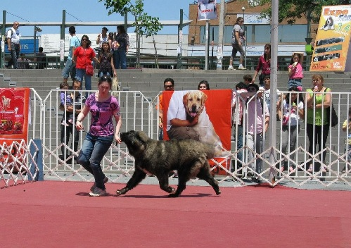 Caucasian Shepherd Dog Training