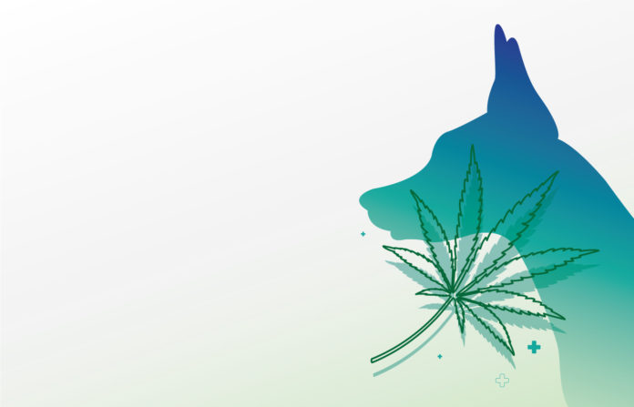 Choosing a CBD product on your canine: the foremost distinction between treats, tinctures, and tablets