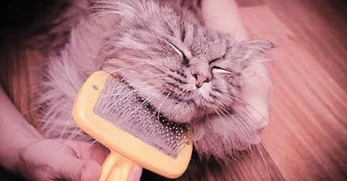Flea Treatment for Cats Protect Your Cats