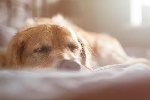How To Choose The Right Pet Bed