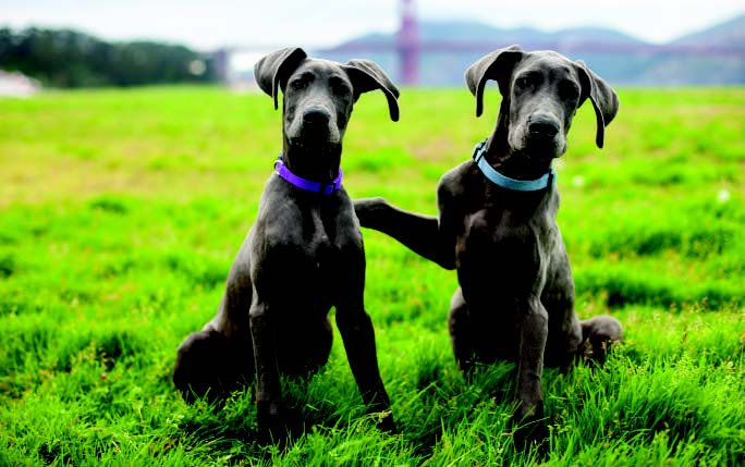 How to Help Your Dog Play Well With Others
