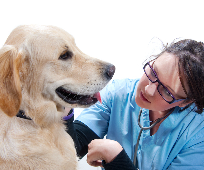 How to Make Your Dog's Vet Visit Less Scary