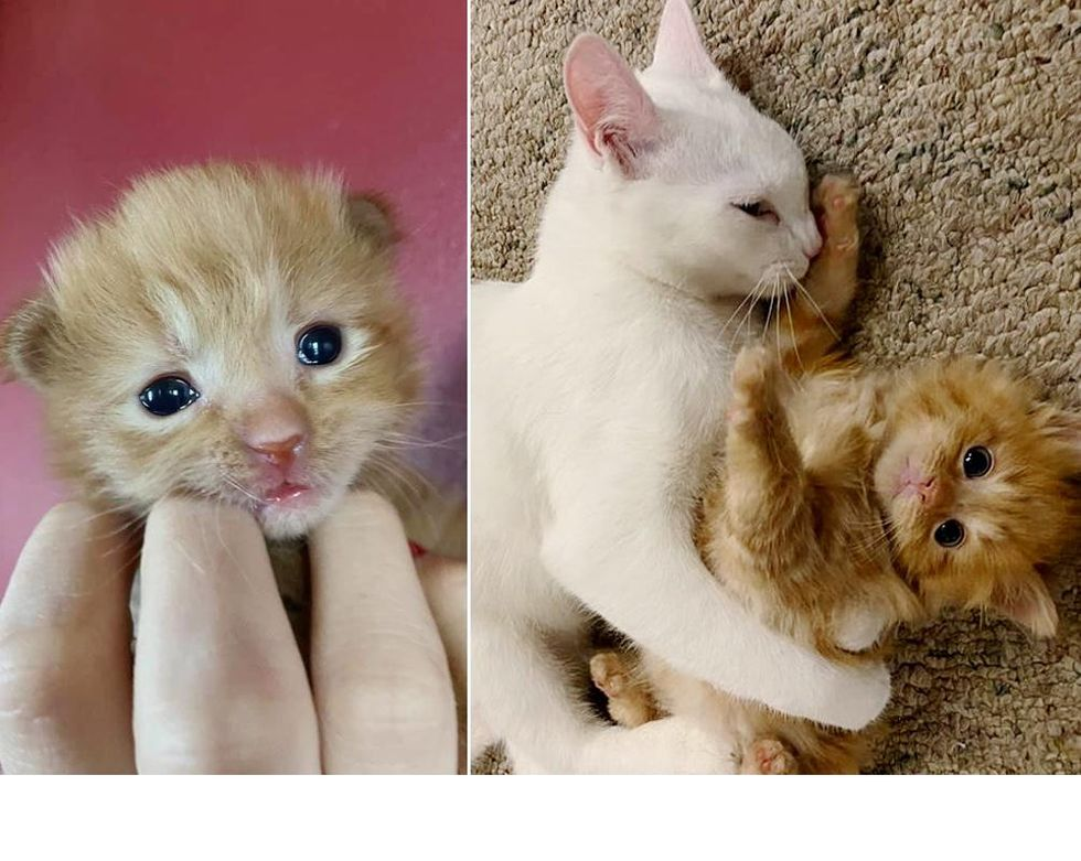 Kitten Born in Shelter as Only Baby, Learns to Be a Cat with Help from a Former Foster
