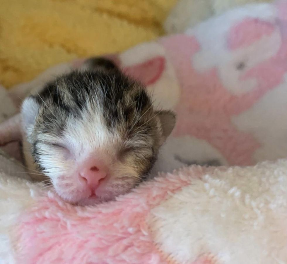 Kitten Found Outside within the Cold Just in Time, Transforms into Sweetest Purr Machine