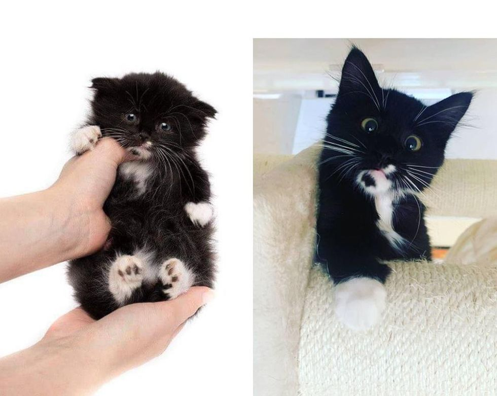 Kitten with Rare Condition Strives to Grow Big and Strong and Won't Let Anything Slow Him Down