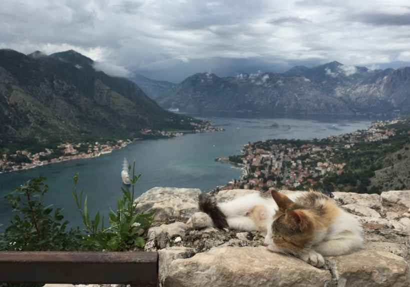 Kotor Kitties: A Movement That's Changing Montenegro's Attitude Towards Cats