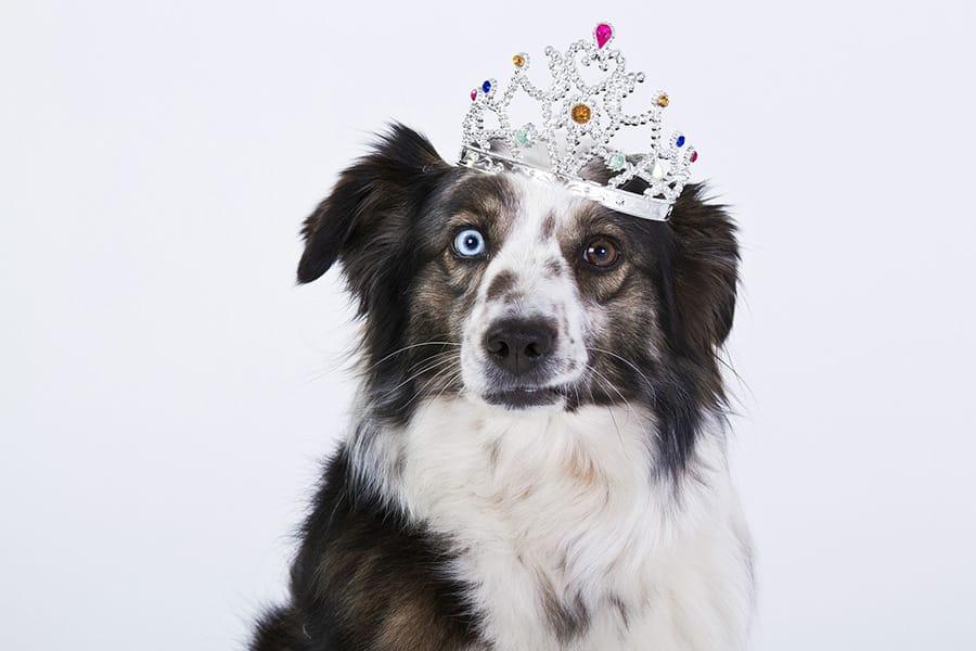 Regal Dog Names – 110+ Noble Names