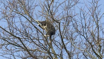RSPCA Rescues Young cat Stuck Around 20m up a Tree