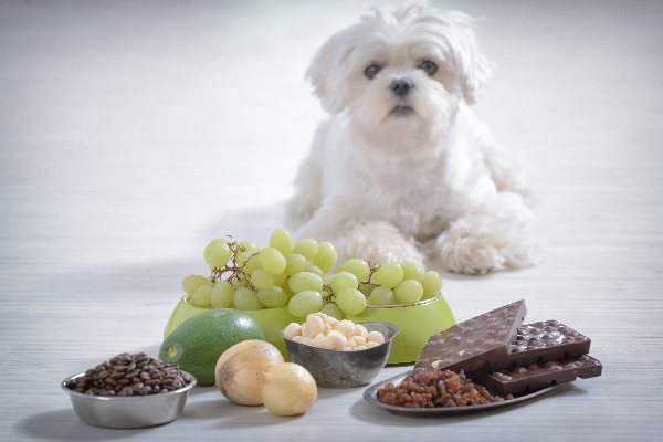 So, Your Dog Ate Onions — Here's What to Know