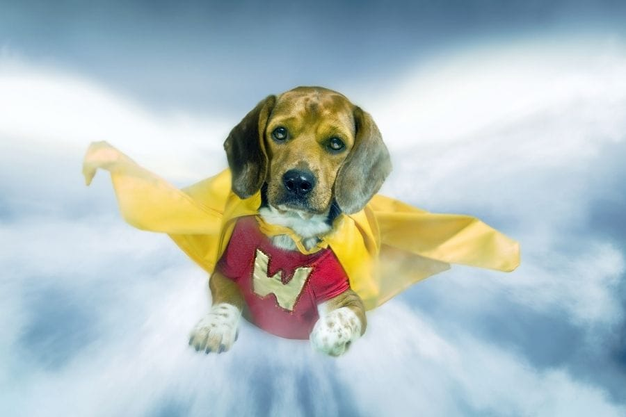 Superhero Dog Names – 110+ Powerful Ideas