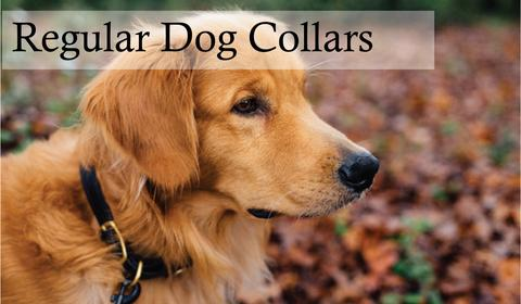 The Complete Guide to Choosing with proper Dog Collars