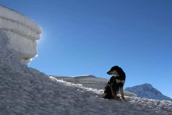 The First Dog to Conquer the Himalayas
