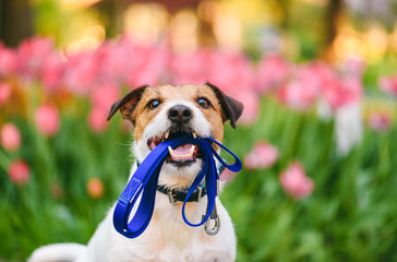 Tips for Taking Care of Your Dog within the Spring