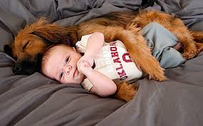 Whether the Dog Is Good or Bad for Baby