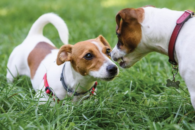 Why Dogs Bite and How to Stop it