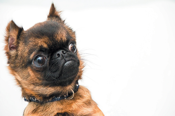 Why Is My Dog's Stomach Making Noises? A Vet Weighs In