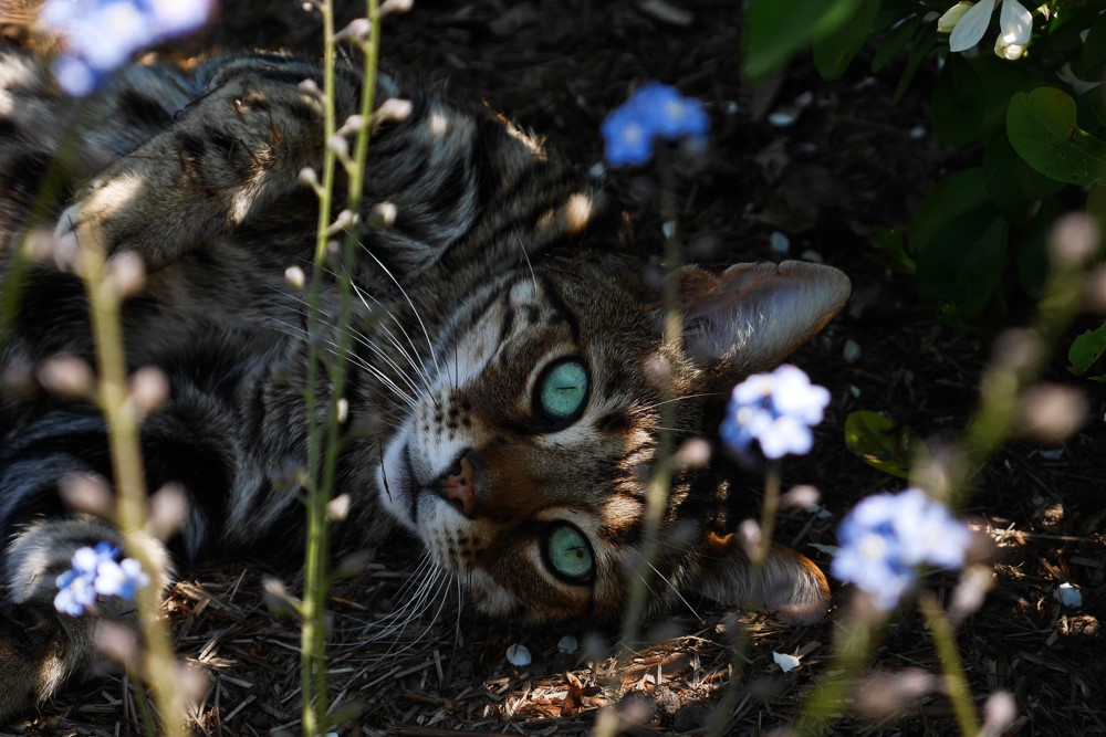 2020 'The Six Stages of Cats' Photography Competition Winner – Cate Madgwick from the UK
