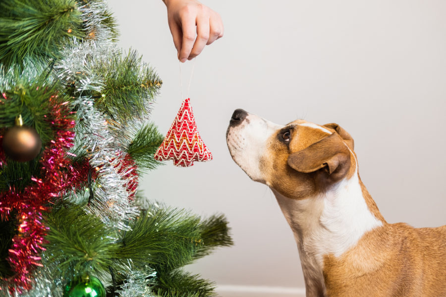 4 tips to avoid the emergency vet clinic during the holidays
