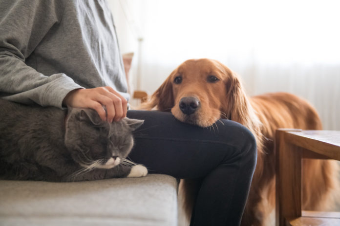 5 ways to promote kidney health in your dog or cat
