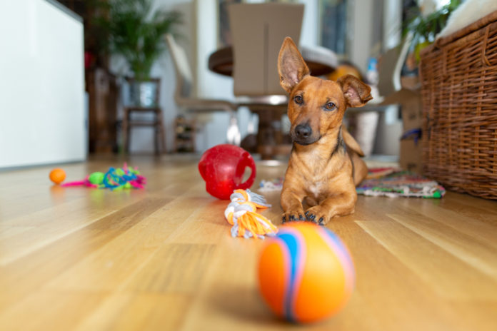 6 safety tips for dog toys