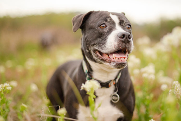 8 steps to keeping your senior dog young