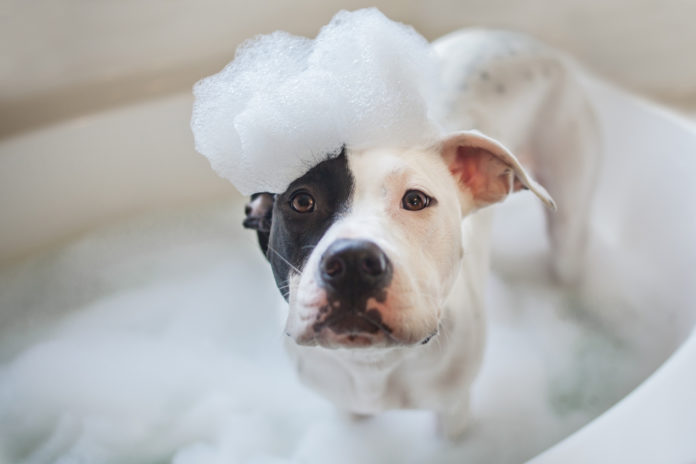A natural and effective solution for smelly dogs and cats
