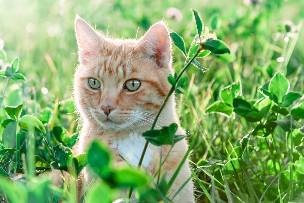 Agria – The UK's First Carbon Neutral Pet Insurer!