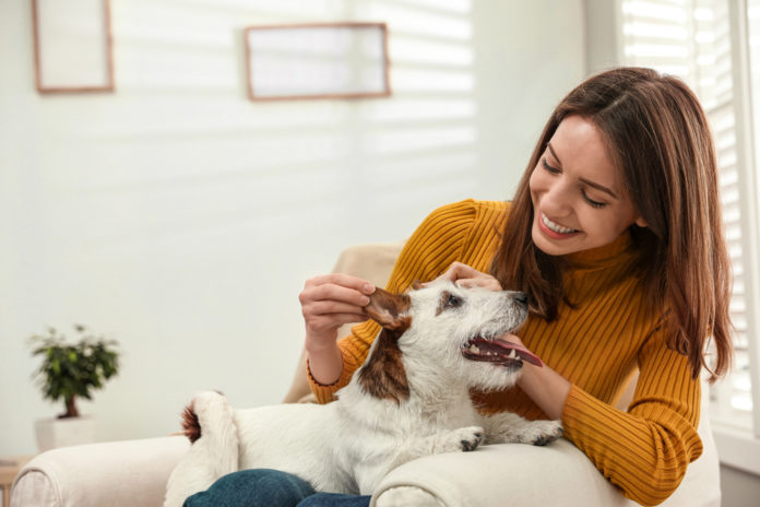 Boost your dog's immunity with acupressure