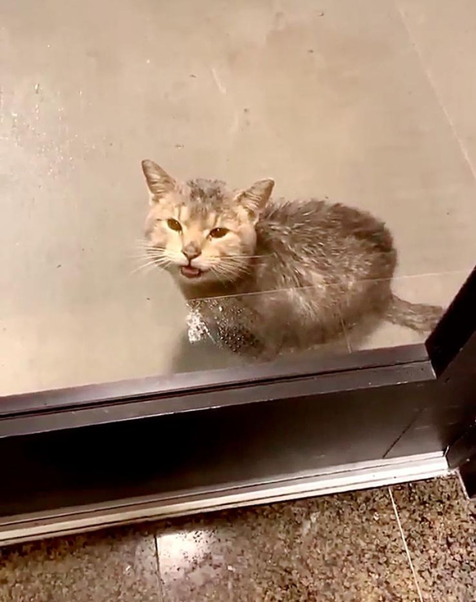 Cat Showed Up on the Door of Workplace and Asked to Be Let Inside from the Rain