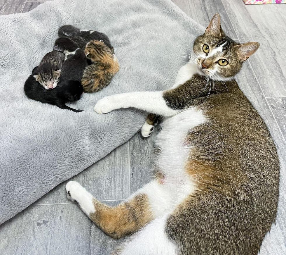Cat Visits Neighbor Who Was Kind to Her, So Her Kittens Can Live Better Life