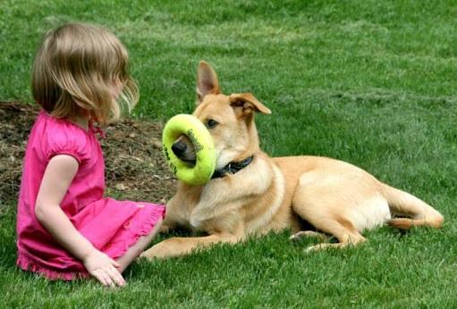 Chinook Dog Training