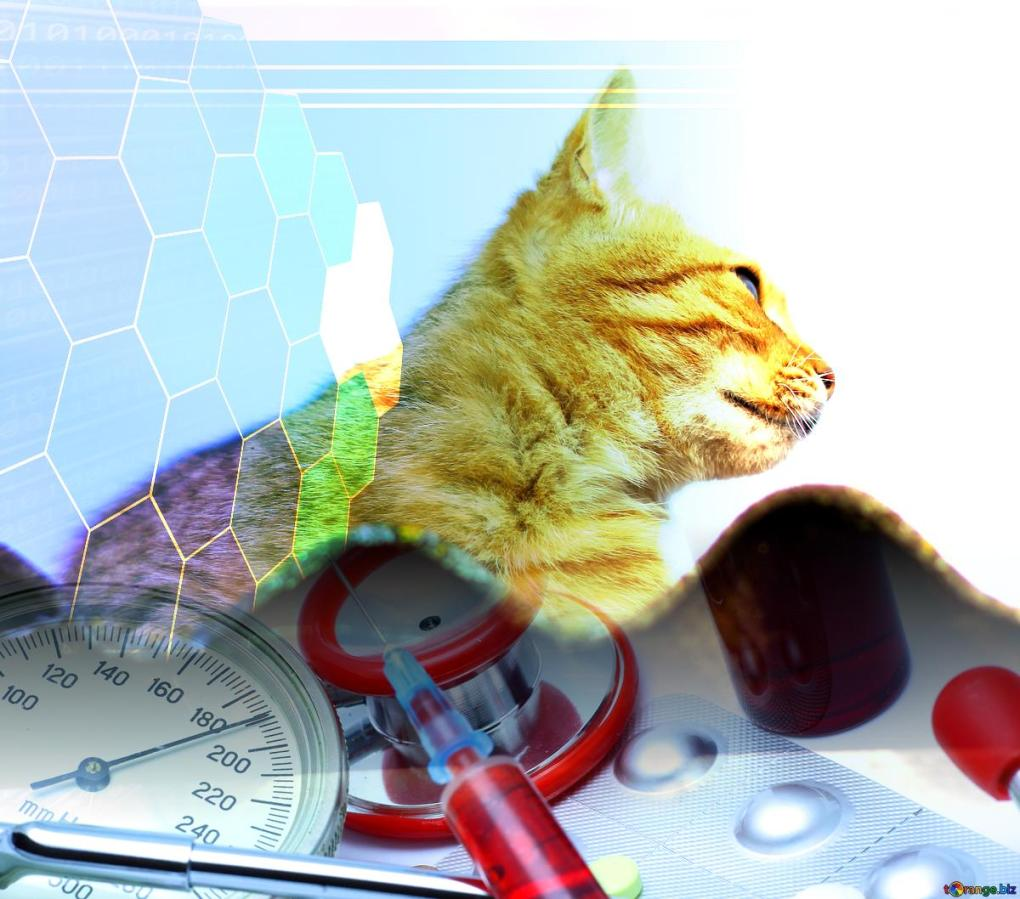 Creating a Brighter Future for Cats with Kidney Disease