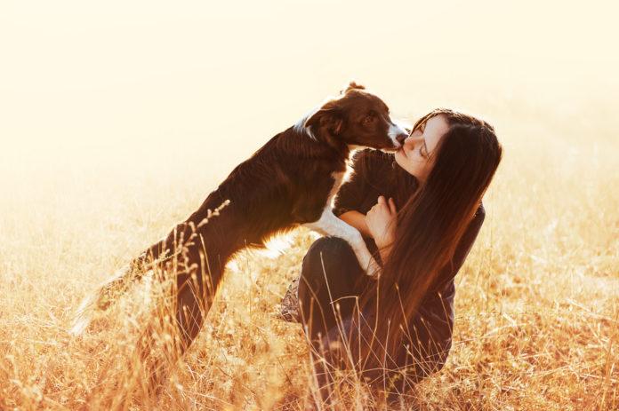 DoggyStat rapidly resolves non-infectious canine diarrhea