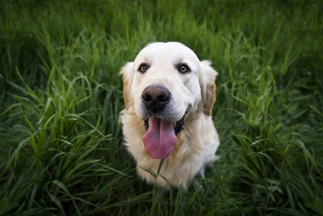 Dr. Aziza Shares Her Top Pet Parent Tips for World Veterinary Day