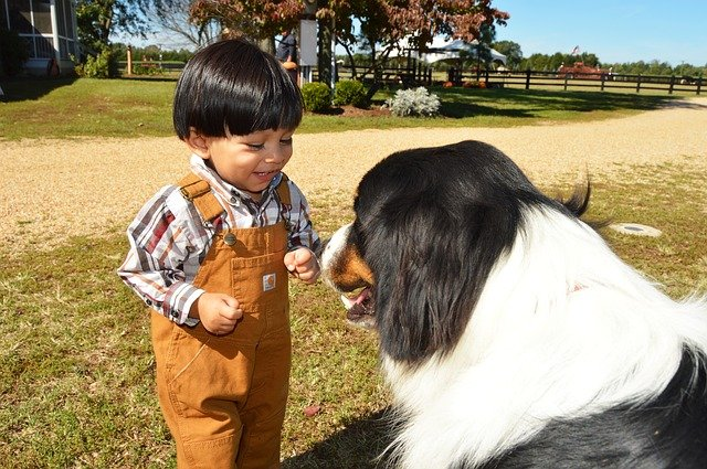 Family Tips: How To Help Dogs & Toddlers Co-Exist Peacefully