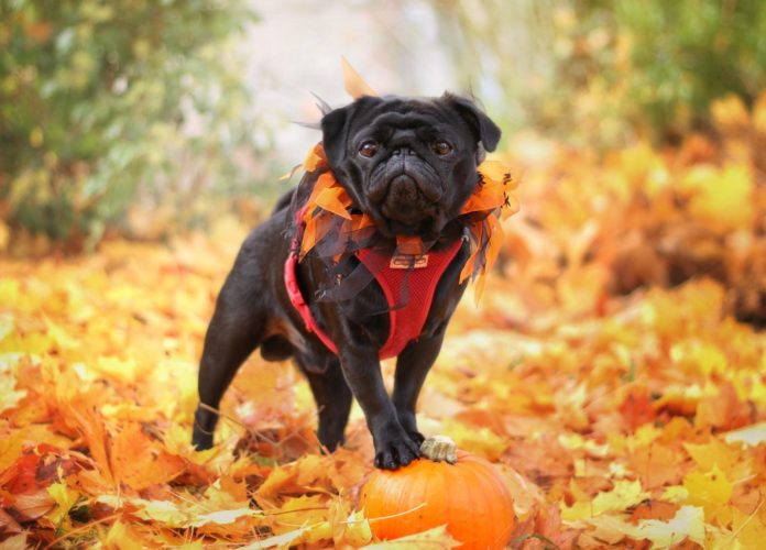 Fun things to do with your dog this fall